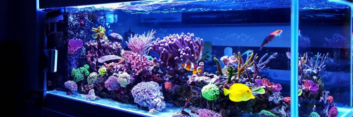 11 Benefits Of Having An Aquarium Wavemaker 2