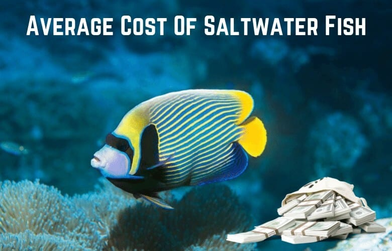 cost of saltwater fish