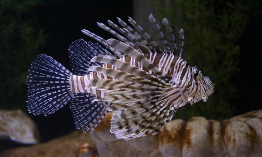 Large Reef Safe Fish (Your Corals Will Be Fine With These) 7