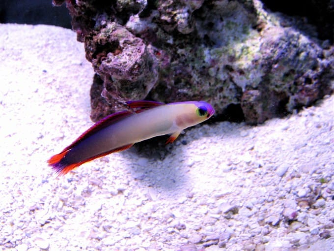 Best Saltwater Fish For A 55 Gallon Tank