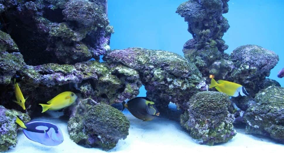 How To Aquascape A Reef Tank | Tips And Tricks 2