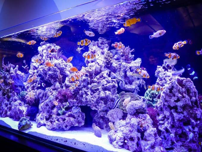 11 Benefits Of Having An Aquarium Wavemaker 3
