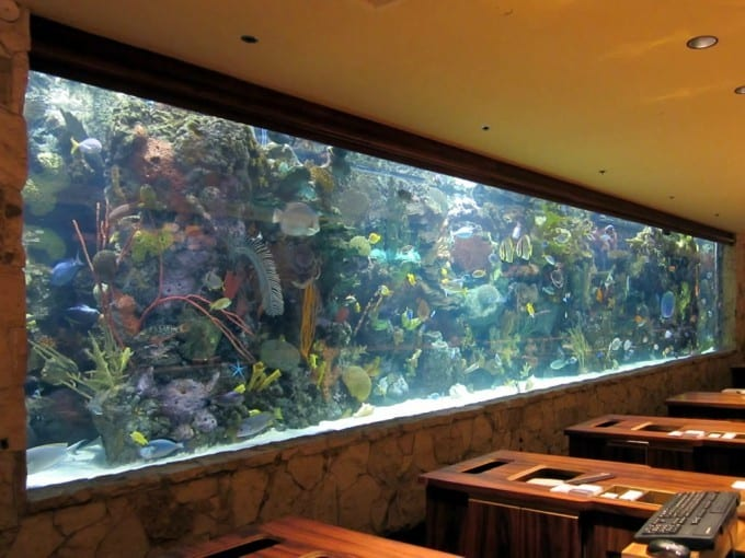 Is My Aquarium Overstocked? (9 Signs To Keep An Eye On) 2
