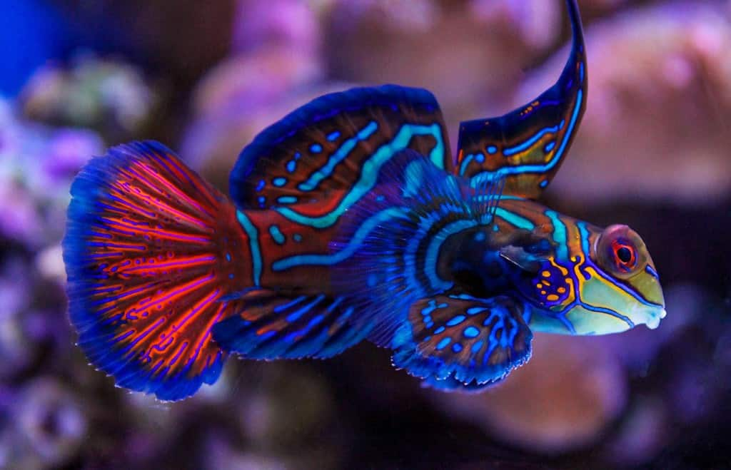 9 Best Saltwater Fish For A 55 Gallon Tank 3