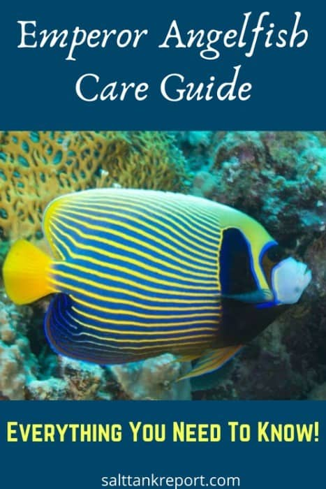 Emperor angelfish care guide