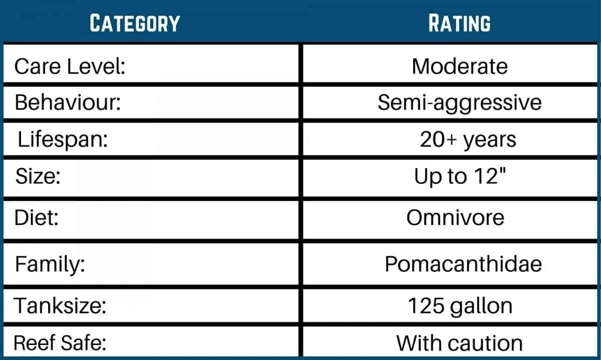 Saltwater Fish Care Charts 2
