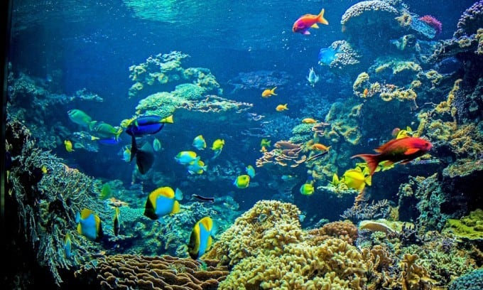 ways to ensure you have a healthy saltwater tank