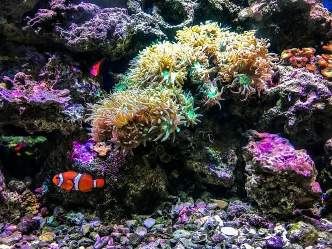 how do you know when your saltwater tank is cycled?