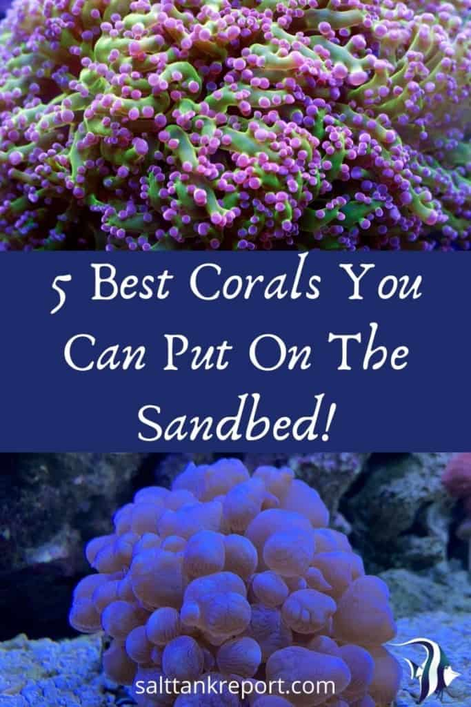 best corals you can put on the sandbed