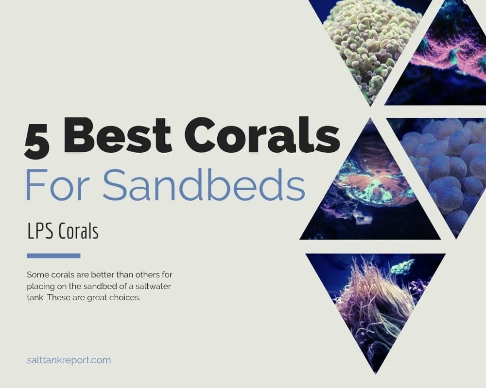 best corals to put on sandbed