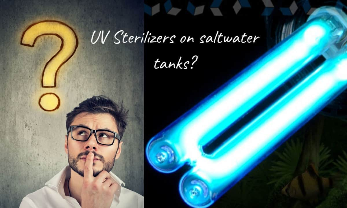 Do You Need A UV Sterilizer For Saltwater Aquariums?