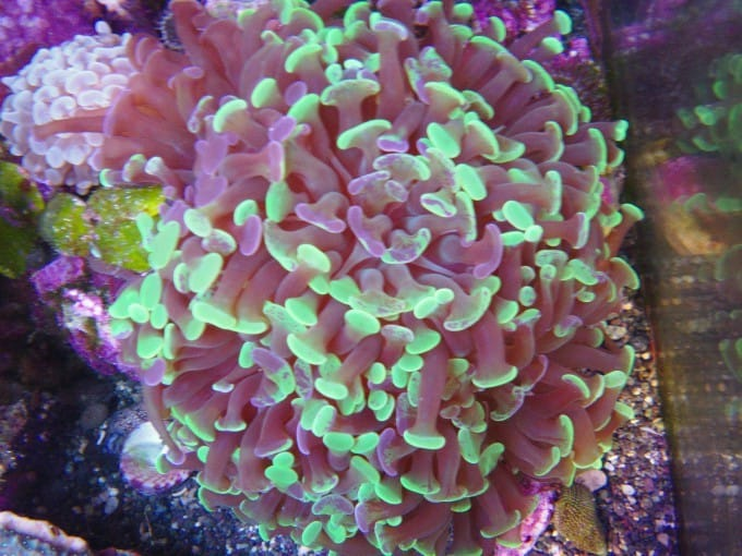 best corals to place in the sandbed