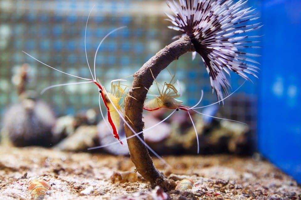 7 Best Marine Invertebrates For Nano Tanks 1