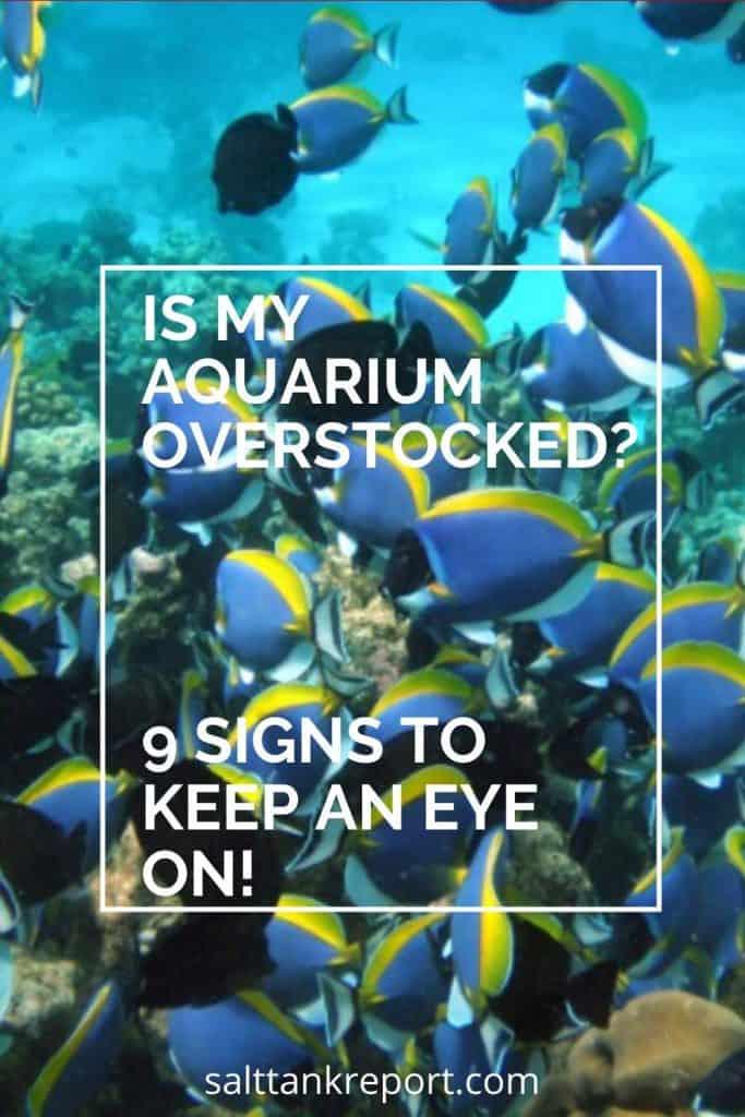 is my aquarium overstocked