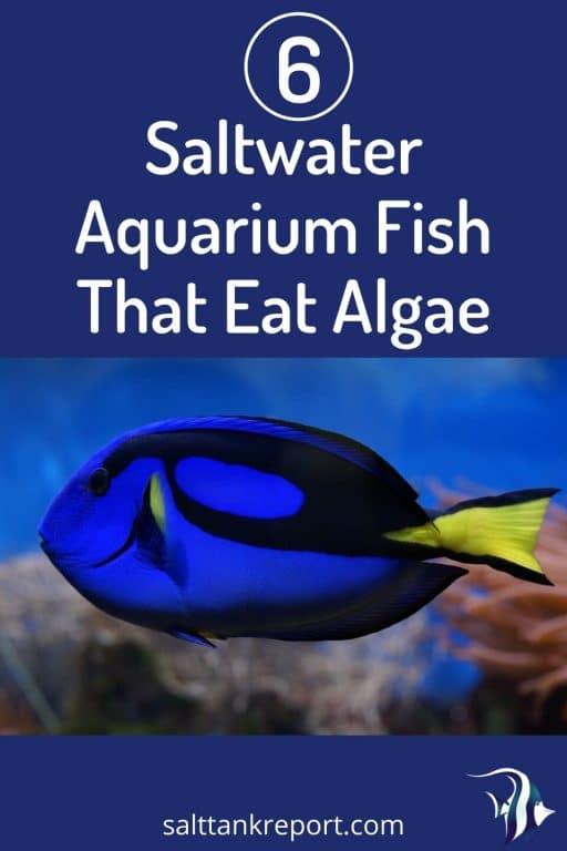 Saltwater Aquarium Fish That Eat Algae