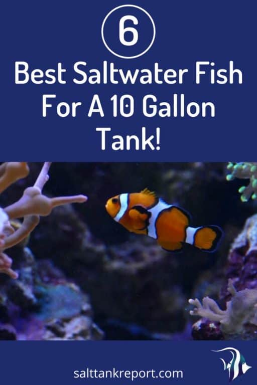 best saltwater fish for a 10 gallon tank
