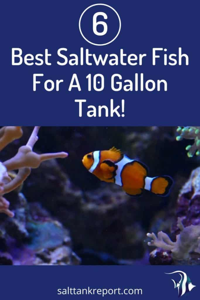 6 Best Saltwater Fish For A 10 Gallon Tank