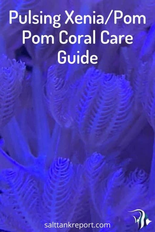 pulsing xenia care guide