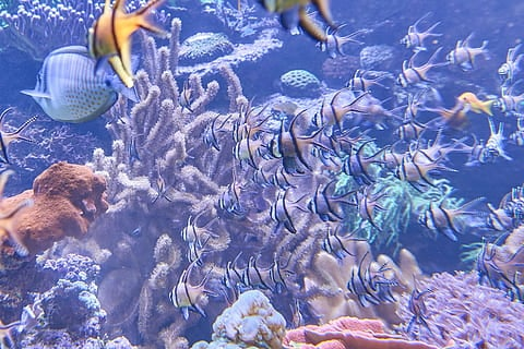 Is My Aquarium Overstocked? (9 Signs To Keep An Eye On) 4