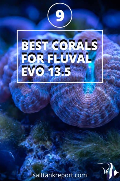 best corals for fluval evo 13.5