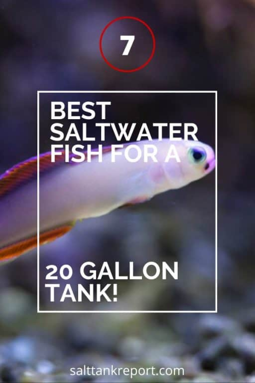 best saltwater fish for a 20 gallon