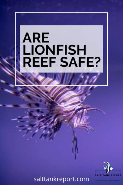 are lionfish reef safe