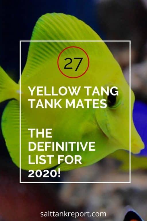 yellow tang tankmates