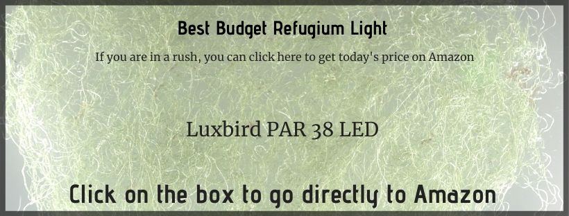 best budget refugium light