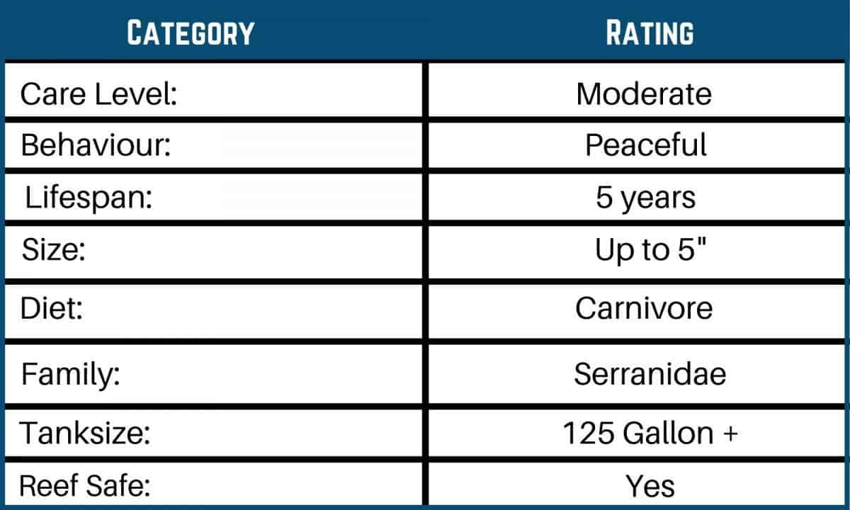 Saltwater Fish Care Charts 12