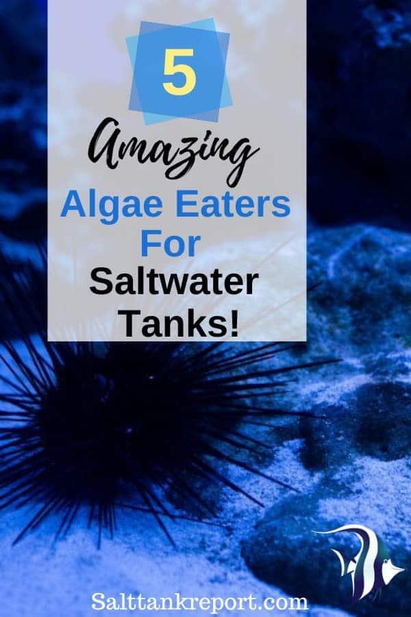 algae eaters for saltwater tanks