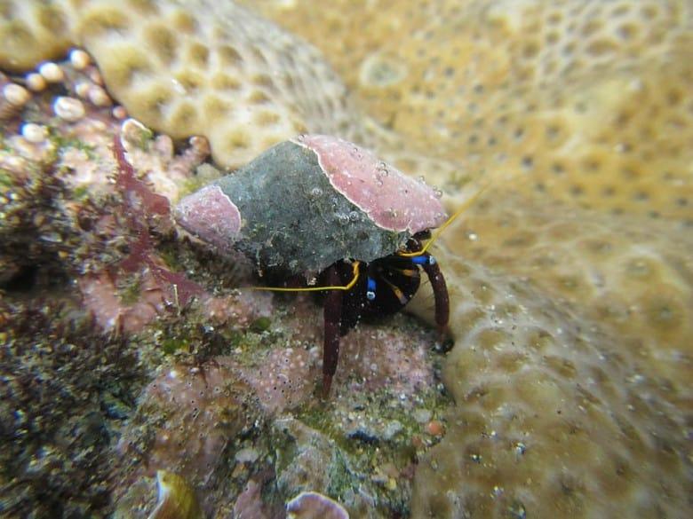 5 Amazing Algae Eaters For Saltwater Aquariums 4