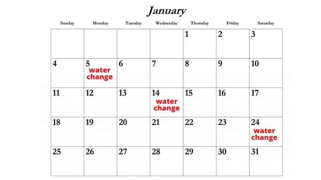 water change schedule