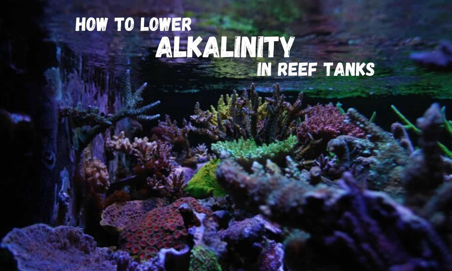 how to lower alkalinity in reef tanks