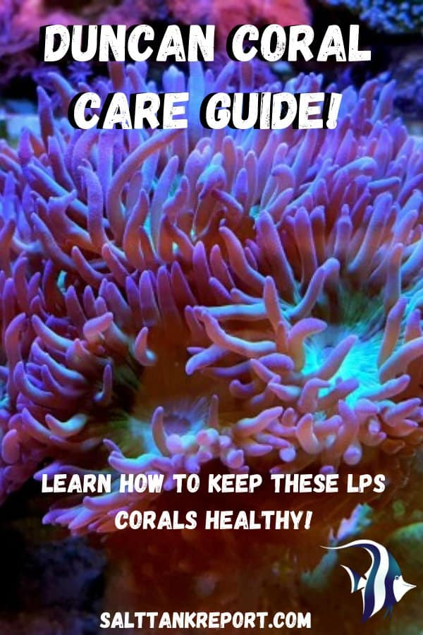 duncan coral care guide