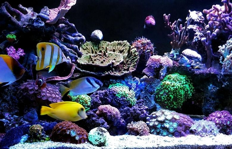 Saltwater Aquarium Basics (What Beginners Need To Know) 1