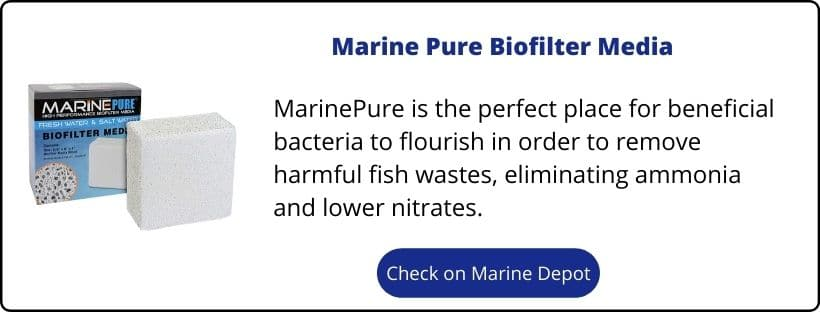 Nutrient Export For Reef Tanks (The Methods You Should Use) 3