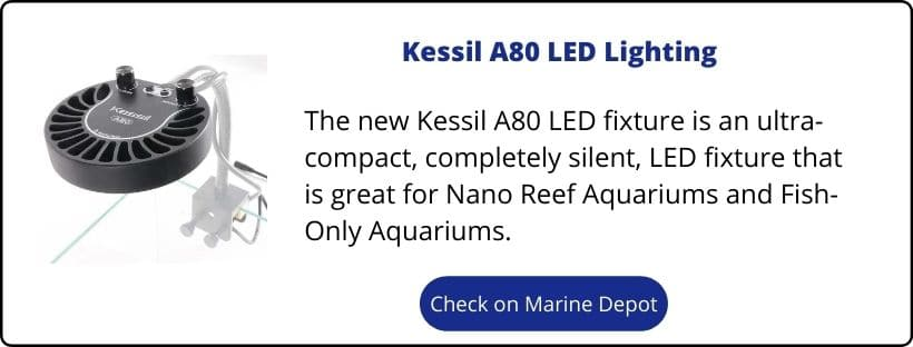 IM Nuvo Fusion 20 Upgrades - Kessil A80 LED