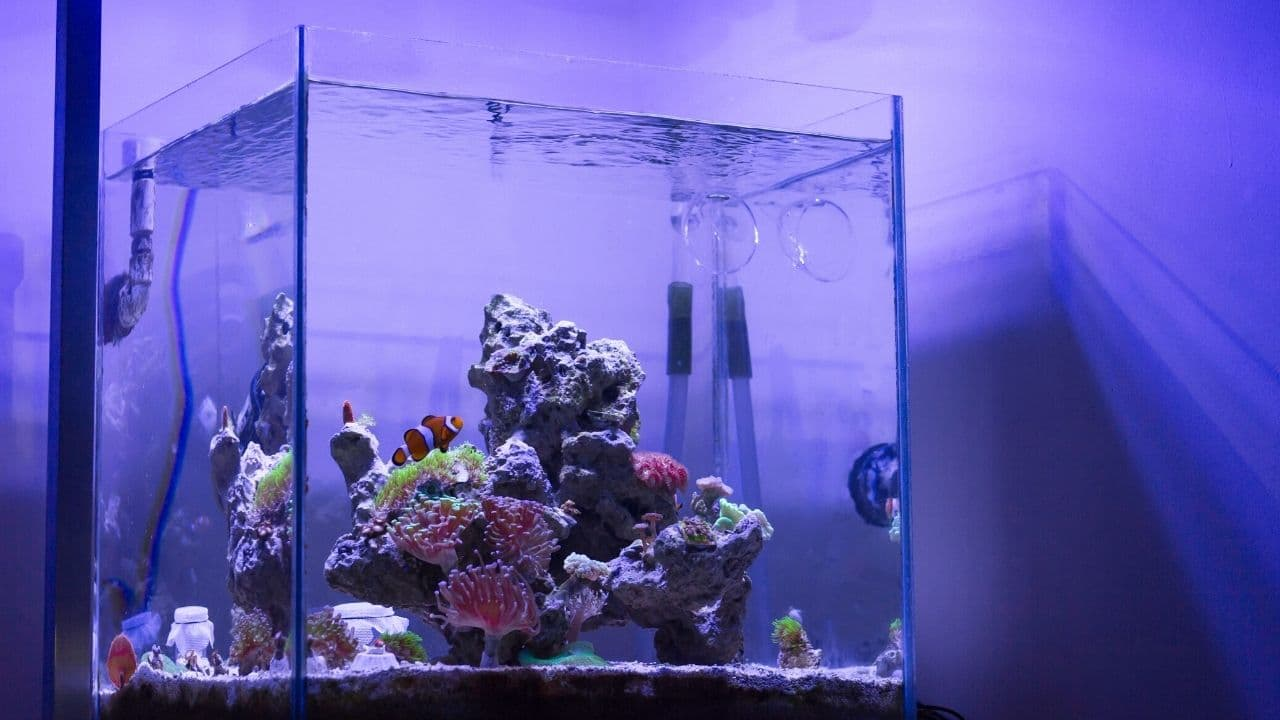Nutrient Export For Reef Tanks (The Methods You Should Use) 1