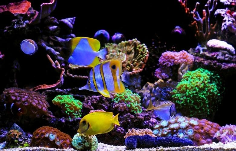 How Often Can I Add Fish To My Saltwater Tank? 1
