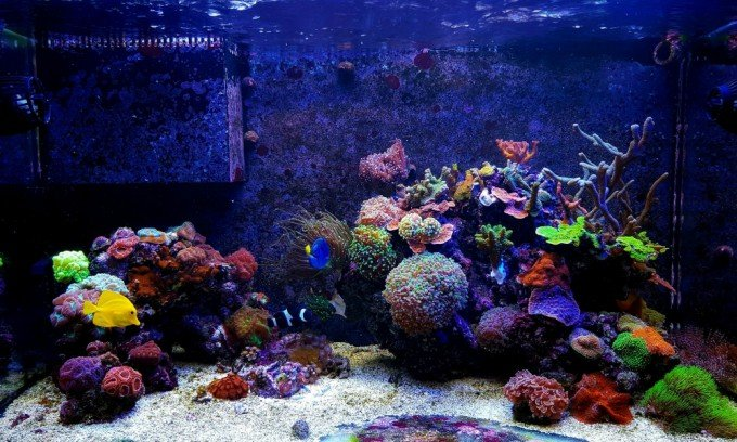 Reef Tank Evaporation Rate - How Much Will You Lose? 1