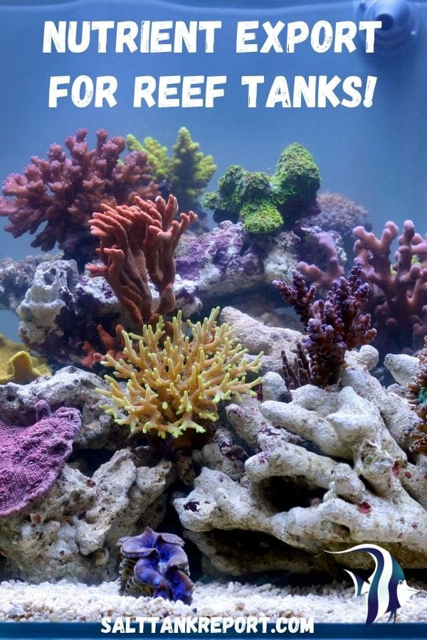 nutrient export for reef tanks