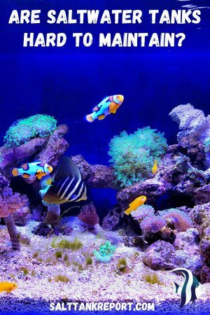 are saltwater tanks hard to maintain