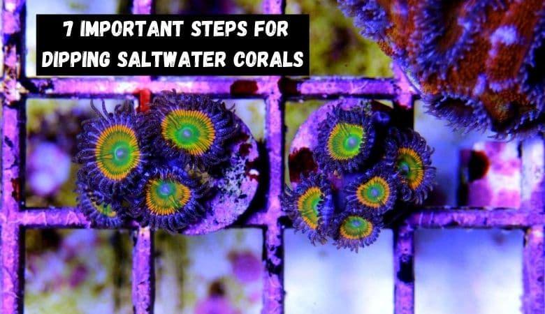 how to dip saltwater corals