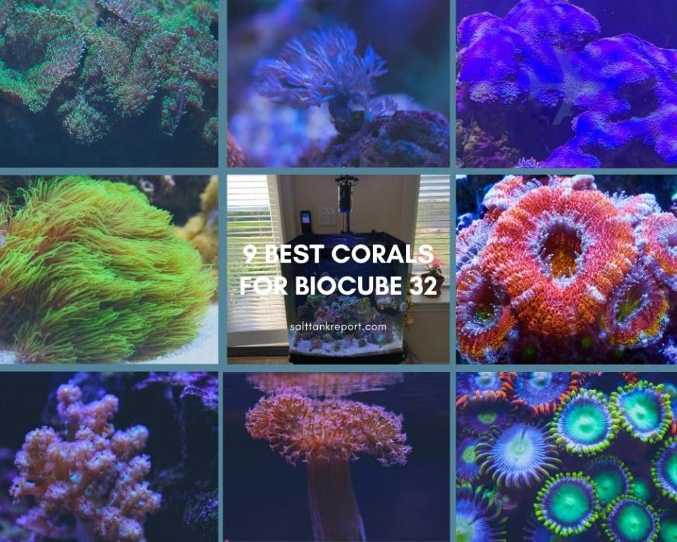 best corals for biocube 32