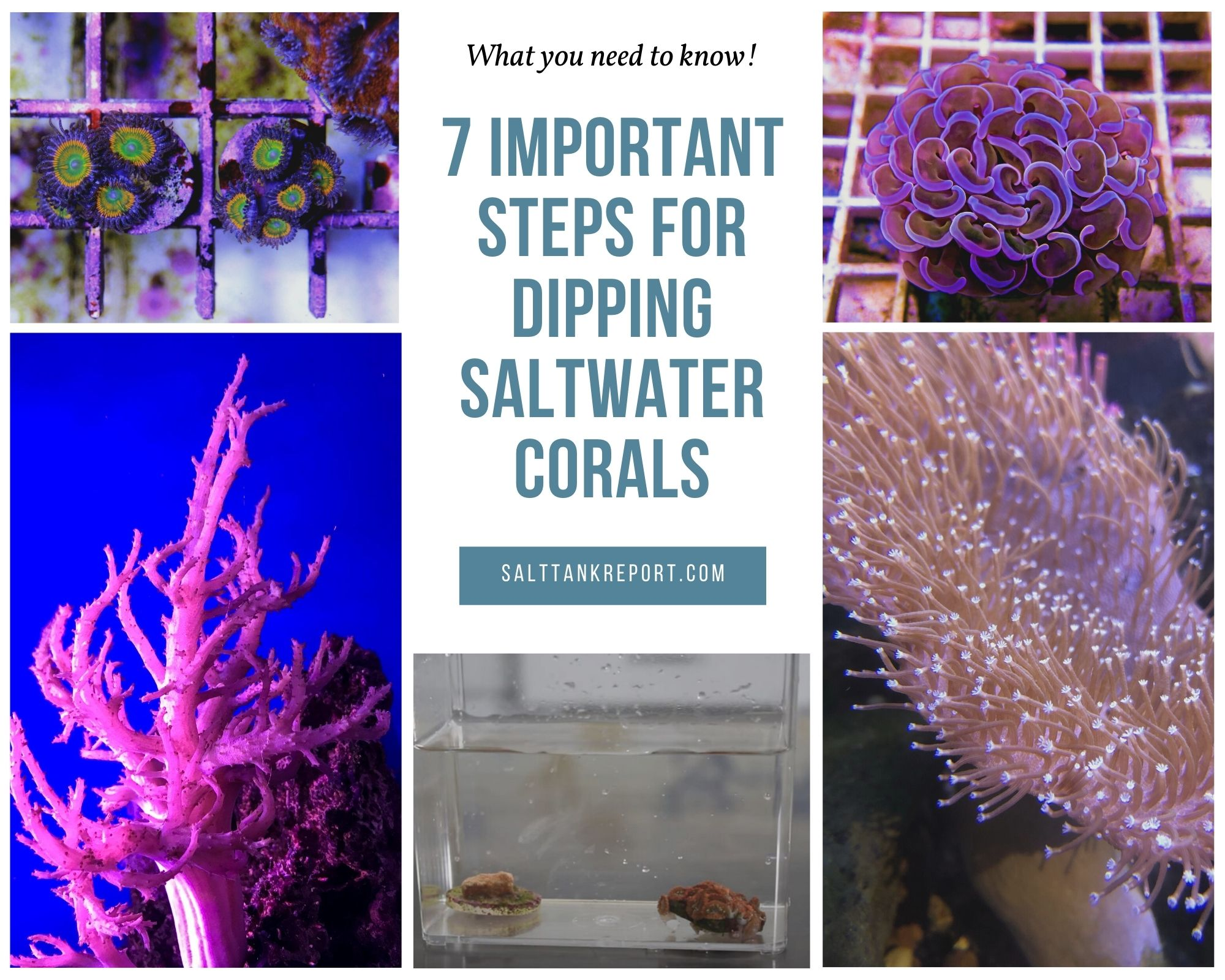 dipping saltwater corals