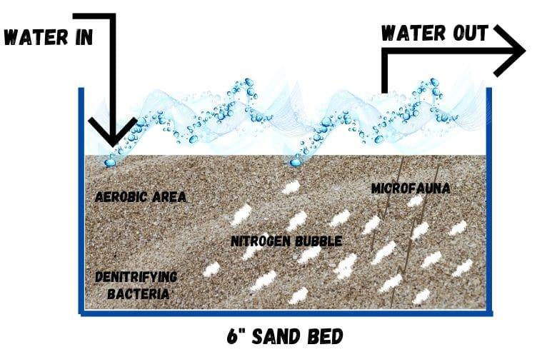 sand in a saltwater refugium