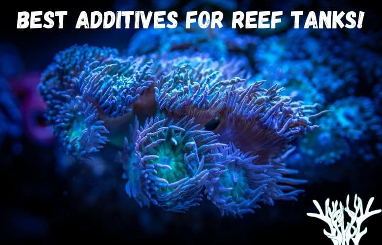 Best Additives For Reef Tanks (How To Choose The Right Ones) 1