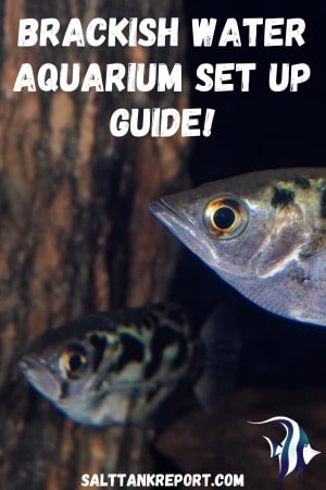 brackish aquarium set up guide