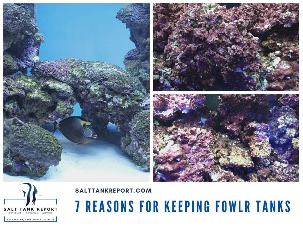 Keeping Fowlr saltwater tanks