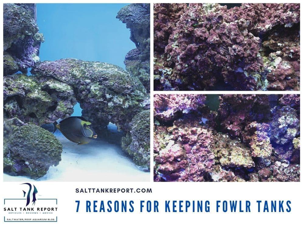 Keeping Fowlr saltwater tanks